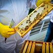 Pocket-lint learns beekeeping - photo 3