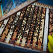 Pocket-lint learns beekeeping - photo 4