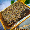 Pocket-lint learns beekeeping - photo 5