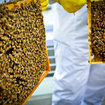 Pocket-lint learns beekeeping - photo 6