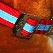 Tagg The Pet Tracker collar keeps your pets smart - photo 5
