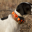 Garmin Astro DC 50 dog collar launches with bark detection and more robust GPS, battery life - photo 1
