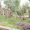 Google Street View visits the zoo, captures panoramic views of China's Giant Pandas - photo 3
