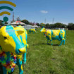 Going to Glastonbury and want free Wi-Fi? Just plonk yourself next to a cow - photo 2