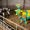 Going to Glastonbury and want free Wi-Fi? Just plonk yourself next to a cow - photo 3