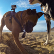 GoPro Fetch is a new harness that lets you capture what your dog sees - photo 1