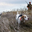 Garmin unleashes the Astro 220 dog tracker - photo 4
