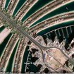 Google Earth unveils more GeoEye-1 satellite images - photo 3