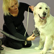 Dyson Groom promises to rid your dog of moulting hair - photo 8
