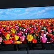 Samsung 55-inch Super OLED TV pictures and hands-on - photo 8