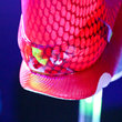 Under Armour Speedform pictures and eyes-on: The running shoe designed like a bra - photo 11