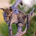 Wildlife photography competition launches