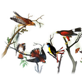 Google Doodle takes flight for John James Audubon's 226th birthday