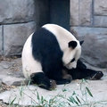 10 tips for beating Google Panda