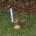 Jedi squirrel lightsabre antics caught on video