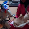 Kinect hack + Wiimote + cat + robot = Guaranteed internet hit (video)