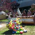 Jelly Bean arrives at Google HQ