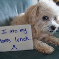 WEBSITE OF THE DAY: Dog Shaming