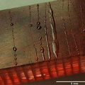 Self-healing material can be damaged several times and will keep on fixing itself