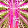 Indoor LED farm grows 2.5x faster than outdoors, uses 99% less water and produces 40% less waste