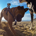GoPro Fetch is a new harness that lets you capture what your dog sees