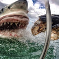 The best GoPro photos in the world, prepare to lose your breath