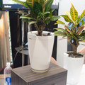 Parrot Pot and Parrot H2O: Two new sensors to make sure your plants never die
