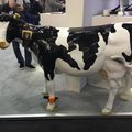 Internet of Cows is now a thing as UK start-up creates cow tracking app