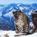 Planet Earth II is coming to the BBC and it will be in 4K