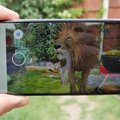 Google search results now include augmented reality creatures