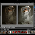 Adobe Lightroom release date announced