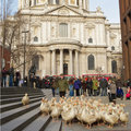 T-Mobile's latest publicity stunt: 100 geese in central London