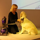 Dyson Groom promises to rid your dog of moulting hair - photo 7