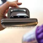 Dyson Groom promises to rid your dog of moulting hair - photo 9