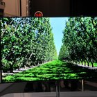 Samsung 55-inch Super OLED TV pictures and hands-on - photo 9