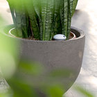 Koubachi Wi-Fi Plant Sensor hits UK in time for Chelsea Flower Show - photo 1