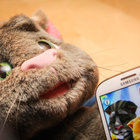 Talking Tom Superstar pictures and hands-on - photo 1