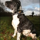 Orange launches SIM-based dog tracking system - photo 3