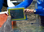 Even dolphins want an iPad - photo 1