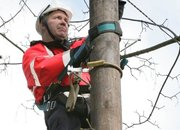 Virgin Media keen to climb BT's poles - photo 2