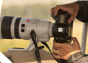 Canon EOS 5D Mk III spied on safari? - photo 3
