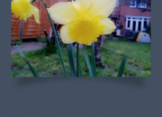 App of the day: Camera360 review (Windows Phone 8) - photo 4
