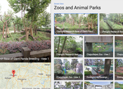 Google Street View visits the zoo, captures panoramic views of China's Giant Pandas - photo 1