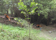 Google Street View visits the zoo, captures panoramic views of China's Giant Pandas - photo 2