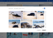 Microsoft OneDrive update improves your experience with photo, videos, and files - photo 3
