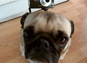 Gorillapod gets dogs eye view - photo 4