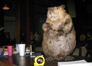 Computers for animal lovers - the beaver - photo 2
