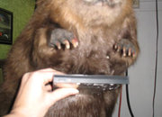 Computers for animal lovers - the beaver - photo 4