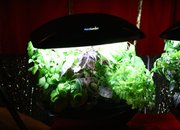 AeroGarden computer plant-pot promises perfect harvest - photo 2