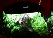 AeroGarden computer plant-pot promises perfect harvest - photo 4